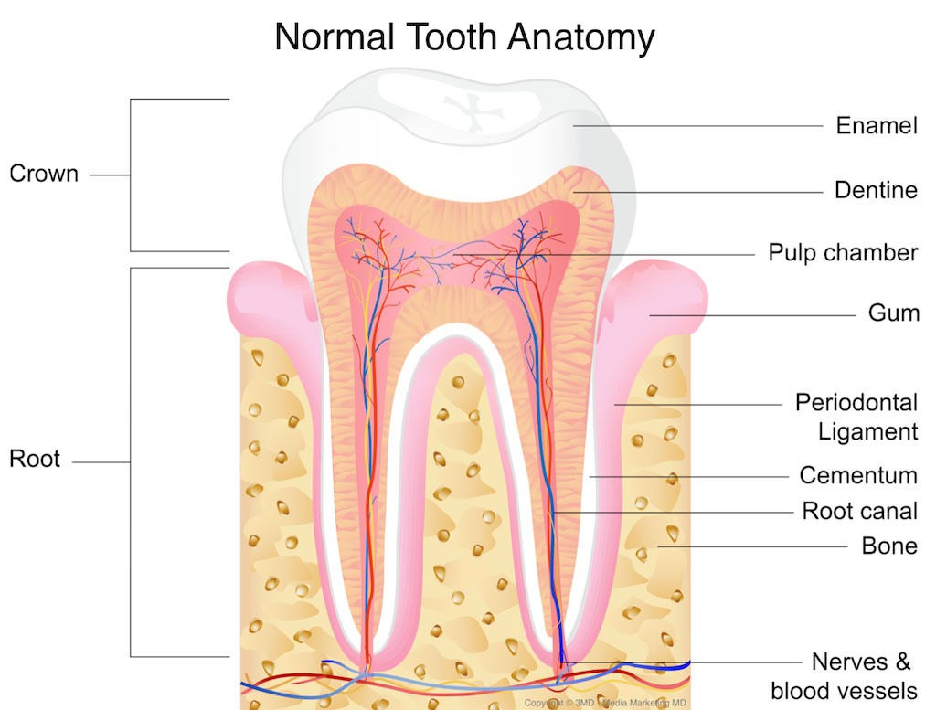 13 - شایع ترین آسیب دندان ها